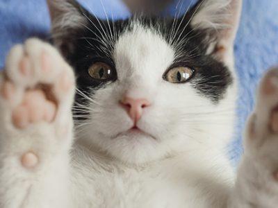 hotel para felinos, hotel para gatos