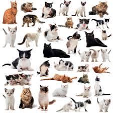 hotel para felinos, hotel para gatos, Hotel para felinos, gatos no Tatuapé na zona leste.