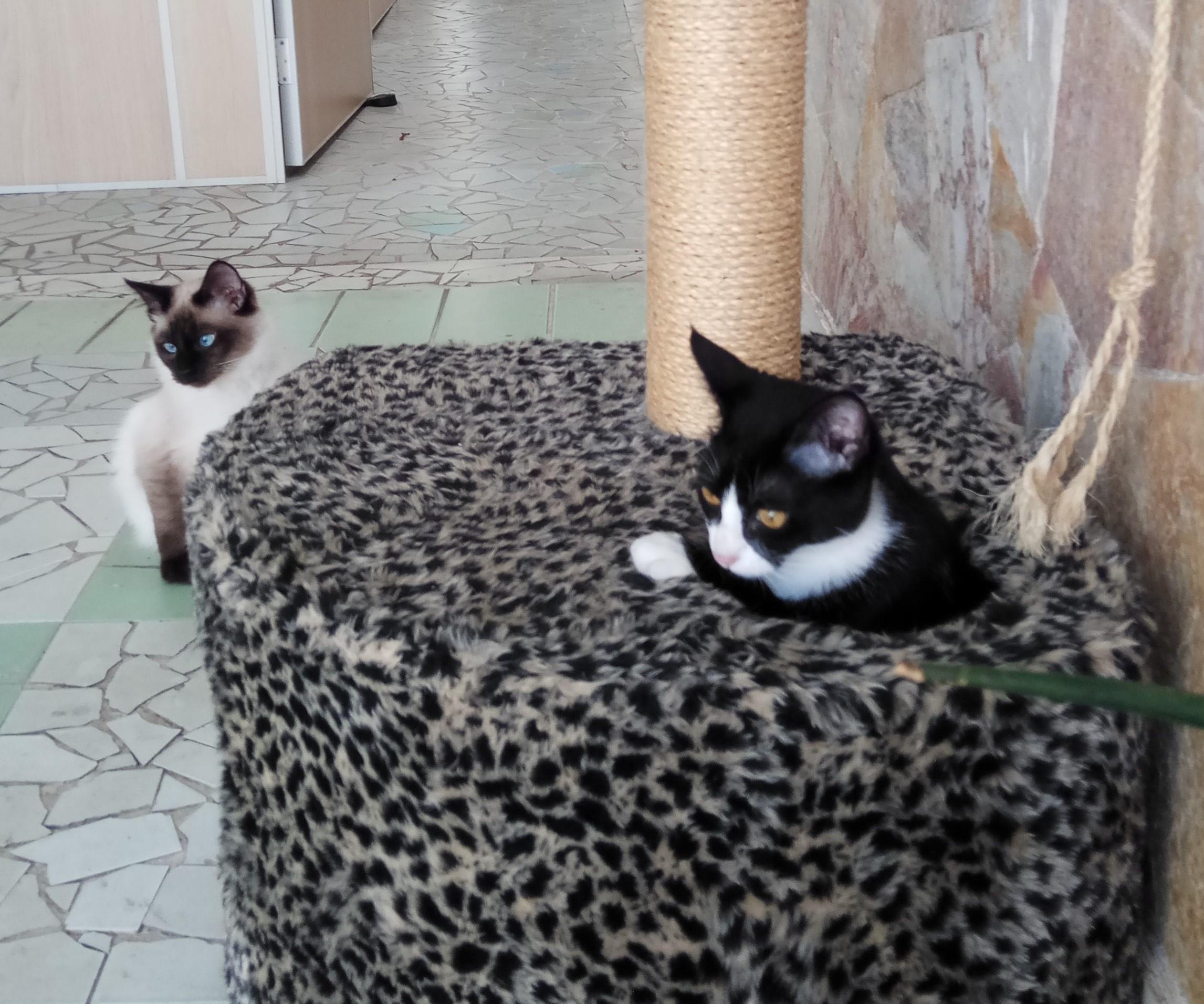 hotel para gato na zona leste, hotel para gato no tatuapé, hotel para gatos na zona leste, hotel para gatos no tatuapé, hotel para felinos na zona leste, hotel para felinos no tatuapé, hotel para gatos, hotel para felinos, hotel para felinos