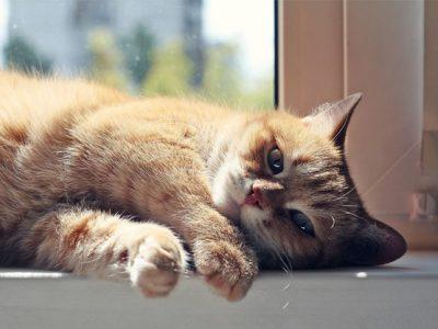 gato deitado perto da janela aproveitando o sol